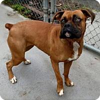 Adopt A Pet :: Betty - Brentwood, TN