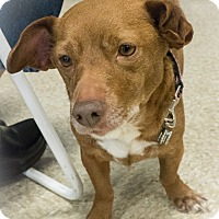 Adopt A Pet :: Ty - Loudonville, NY