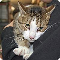 Adopt A Pet :: LoveBug - Brooklyn, NY