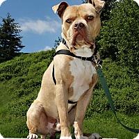 Adopt A Pet :: Nacho - Bellingham, WA