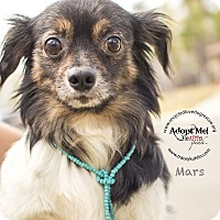 Adopt A Pet :: MARS - Inland Empire, CA