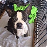 Adopt A Pet :: Elliot - Weatherford, TX