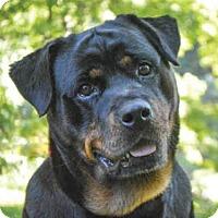 Adopt A Pet :: KOALA - Pittsburgh, PA