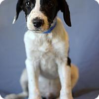 Adopt A Pet :: Montana - Waldorf, MD