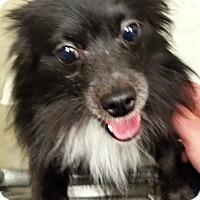 Adopt A Pet :: Oreo 2 - Kalamazoo, MI