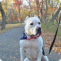 Adopt A Pet :: Petey - Jackson, NJ