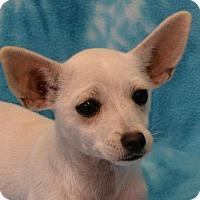 Adopt A Pet :: Tulip - Eureka, CA