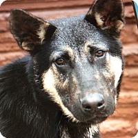 Adopt A Pet :: COOPER VON COOKIES - Los Angeles, CA