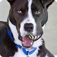 Adopt A Pet :: Cooper - Fredericksburg, VA