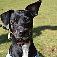 Adopt A Pet :: Manny - Acworth, GA