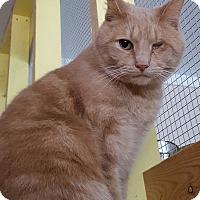 Adopt A Pet :: Dandelion - Henderson, KY