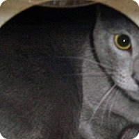 Adopt A Pet :: 334589 - Wildomar, CA