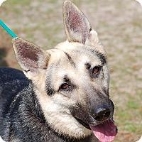 Adopt A Pet :: Sydney AD 03-11-17 - Preston, CT