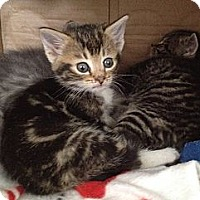 Adopt A Pet :: Blinkey, Winkey & Mickey - Island Park, NY