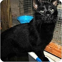 Adopt A Pet :: Shadows FE1-7530 - Thibodaux, LA