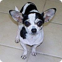Adopt A Pet :: AIMEE - AUSTIN, TX