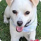 Adopt A Pet :: Juno