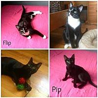 Adopt A Pet :: Pip and Flip - Grandview, MO