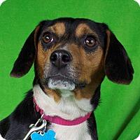 Adopt A Pet :: Asia - Minneapolis, MN