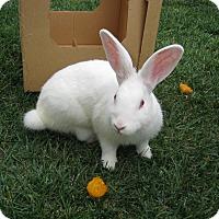 Adopt A Pet :: Peterson - Bonita, CA