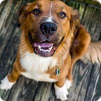 Adopt A Pet :: Kelly - Alpharetta, GA