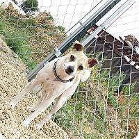 Adopt A Pet :: Staci - Meridian, ID