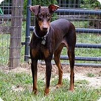 Adopt A Pet :: ROUGE - Greensboro, NC