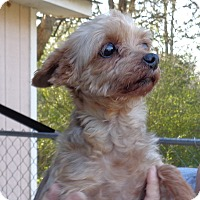 Adopt A Pet :: sheron - Crump, TN