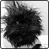 Adopt A Pet :: REBEL - ADOPTION PENDING - St. Paul, MN