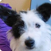 Adopt A Pet :: Patches - MINNEAPOLIS, KS