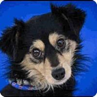 Adopt A Pet :: CODY - Murray, UT