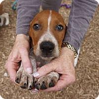 Adopt A Pet :: Mindy - Sudbury, MA