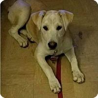 Adopt A Pet :: Leia - North Richland Hills, TX