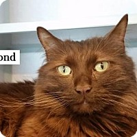 Adopt A Pet :: Fuzzmond - Lakewood, CO