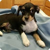 Adopt A Pet :: Jerry - Stockton, CA