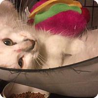 Adopt A Pet :: Penelope - Glen cove, NY
