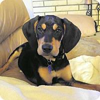 Adopt A Pet :: Oq litter - Durango - ADOPTED - Livonia, MI