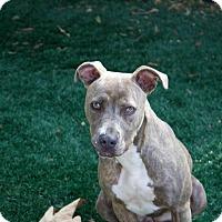 Adopt A Pet :: Jilly - Chula Vista, CA
