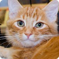 Adopt A Pet :: Truffle - Irvine, CA