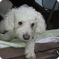 Fluffs And Scruffs A Dog Rescue