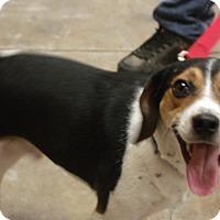 Adopt A Pet :: Buster - Somerset, KY