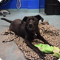 Adopt A Pet :: SKITTLES - Brooklyn, NY