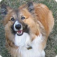 Adopt A Pet :: Scout - Murfreesboro, TN