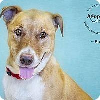 Adopt A Pet :: Sunny - Phoenix, AZ