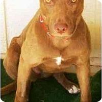Adopt A Pet :: Sandie - Gilbert, AZ