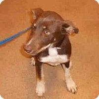 Adopt A Pet :: Bobbi - URGENT - Seattle, WA