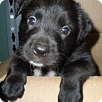Adopt A Pet :: LB - Huntsville, AL