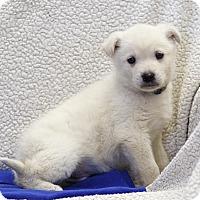 Adopt A Pet :: Norko - Ile-Perrot, QC