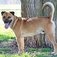 Terrier (Unknown Type, Medium) Mix Dog for adoption in Savannah, Tennessee - Utah