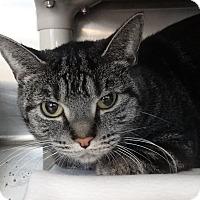 Adopt A Pet :: Noel - Elyria, OH